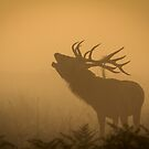 Bellow in the mist by Martin Griffett