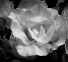 Yellow rose in black and white by GemaIbarra