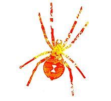 Arachnophilia-Orange/Red Photographic Print
