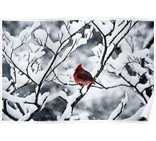 Cardinal In Snow Covered Tree Poster
