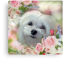 Snowdrop the Maltese - The Face that Melts my Heart Metal Print