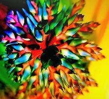 Bromeliad color wheel by ♥⊱ B. Randi Bailey