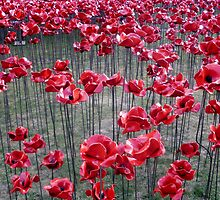 Poppies At The Tower Of London by InterestingImag