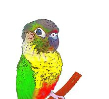 Parrot Phone Cases & Mugs by rebel-angel