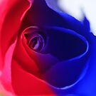 patriotic rose by lensbaby