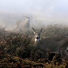 The rut is on! - White-tailed Doe and Buck by Jim Cumming