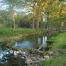 Cypress Creek Fall by Cathy Jones