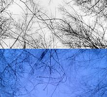 Bare trees branches by AnnArtshock