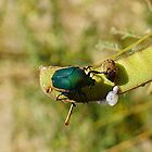 Emerald Bug by Loree McComb