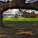 Branching a View by Nancy Richard