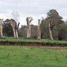 wooden sentries by brucemlong