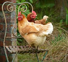 "We Are The ""CHAIRful"" Chooks Of Tranquillity! Chooks  - NZ by AndreaEL"