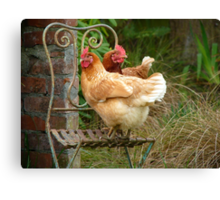 """We Are The """"CHAIRful"""" Chooks Of Tranquillity! Chooks  - NZ Canvas Print"""