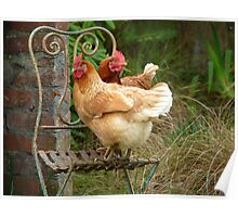 "We Are The ""CHAIRful"" Chooks Of Tranquillity! Chooks  - NZ Poster"