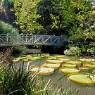 Bridge over the Water Lily Pods by Rosalie Scanlon