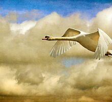Swan Song by Lois  Bryan