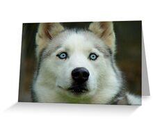 Look Into My Baby Blues!!! - Siberian Husky - NZ Greeting Card