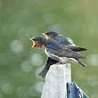 Me..ME...MEEE.... First!!! - Welcome Swallows - NZ by AndreaEL