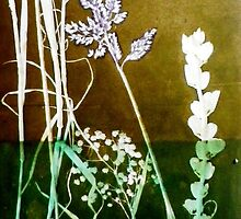 "Mornington Peninsula Grasslands 6 by Belinda ""BillyLee"" NYE (Printmaker)"