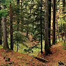 Autumn in mountain forest by Patrick Morand
