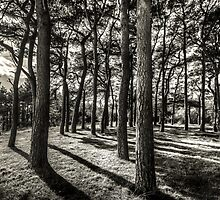 Shadows In The Forest by StephenRphoto