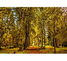 Woodland Pathway Photographic Print