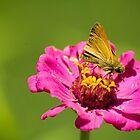 on Flower by KjunSL1