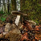 Wild Amanita Mushroom by Charles & Patricia   Harkins ~ Picture Oregon