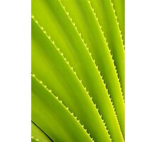 Spiky Plant Photographic Print
