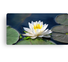 Serenity On The Lily Pond Canvas Print