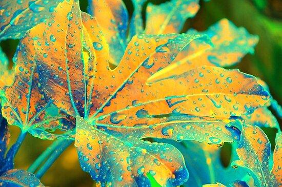 Castor Oil Plant Leaf in Orange by Sheila Laurens