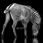 Zebra and the Mill Pond II by Sheila Laurens