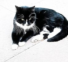 Black & white cat chillin' out by Sheila Laurens