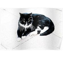 Black & white cat chillin' out Poster