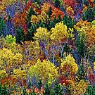 Kaleidoscope of Fall Colors by T.J. Martin