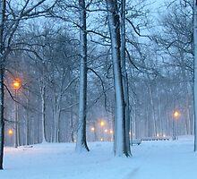 Winter evening in the park by Alberto  DeJesus