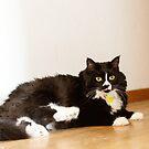Cat 4 by Rebecca Cozart