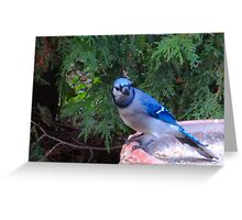 Blue Jays and Peanuts, in the garden and the game! Greeting Card