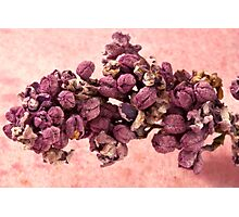 Dried Lilac Blossom Macro  Photographic Print