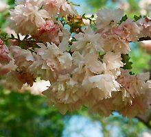 Cherry Blossoms in Brooklyn by dearmoon