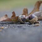 Acorn and leaf still life  by Jeff Stroud