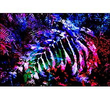 Wentworth Falls Palm Leaves Photographic Print