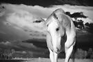 Silver horse, silver clouds  by Penny Kittel