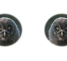 Little Great Grey Owl / Kleiner Bartkauz by Thomas F. Gehrke