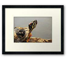 Chin Up! Framed Print