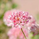 Soft in Pink  by Nicole  Markmann Nelson