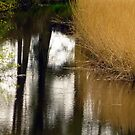 Reed Reflections by Fara