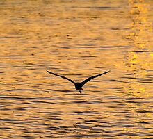 Gliding on Gold by Silken Photography