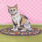 Kitty on a Colorful Rug by Kim  Harris