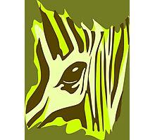Wildlife Zebra Photographic Print
